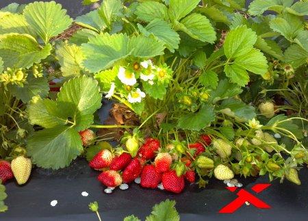 Как повысить свой урожай?