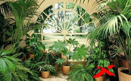 Растения в индийском интерьере. Хлорофитум.