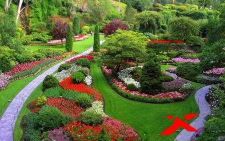Красные цветы в саду