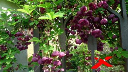 Саженцы экзотических растений и культур